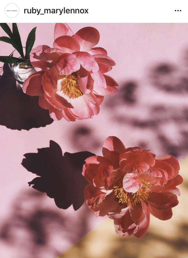 Mary Lennox flowers Instagram